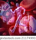 Cardiovascular System 21174993