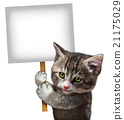Cat Holding Sign 21175029
