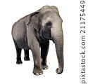 Elephant 21175449