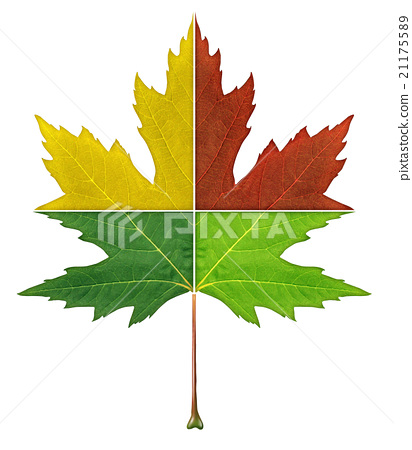 Four Seasons Leaf 21175589