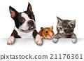 Pets Sign 21176361