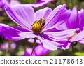 bee honeybee bees 21178643