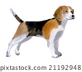 Watercolor illustration of a dog Beagle 21192948