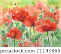 Red poppies flowers. 21193869