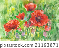 Red poppies flowers. 21193871