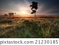 misty summer sunrise on meadow 21230185
