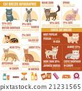 Cats infographics set 21231565
