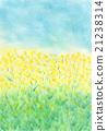 rape, rape blossoms, pastel 21238314