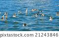 초오시 산책 : 괭이 갈매기 쵸시 어항 21243846