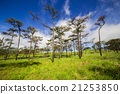 Pine forest with mist and wildflowers field 21253850