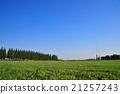 잔디밭, 골, 목표 21257243