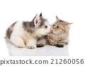 สัตว์,สัตว์ต่างๆ,แมว 21260056