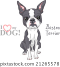 vector sketch dog Boston Terrier breed serious 21265578