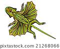 ethnic flying lizard 21268066