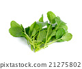 fresh green turnip on the white background 21275802