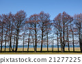 Trees by the waterfront view 21277225