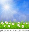 daisy vector background summer design 21279479