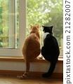 貓 貓咪 小貓 21282007