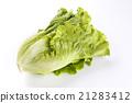 蔬菜 青菜 生菜 21283412