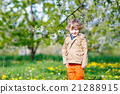Kid boy in spring garden with blooming apple trees 21288915