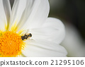 Bee on focus when polinate 21295106