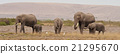 Group of Elephants 21295670