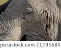 Elephant skin 21295684