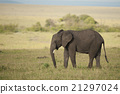 Elephant in the Savannah 21297024