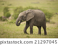 elephant, animal, nature 21297045