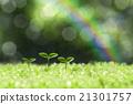 숲의 싹 21301757