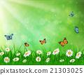 daisy vector background summer design 21303025