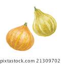 南瓜 水果 葫蘆科 21309702