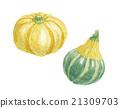 南瓜 水果 葫蘆科 21309703