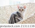 动物 篮子 床 21311136