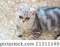 动物 篮子 猫 21311140