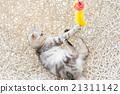 美国 美国人 动物 21311142