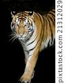 Tiger 21312029