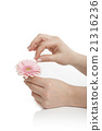 Female hand holding a pink flower 21316236