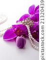 花朵 蘭科 西方蘭花 21320439