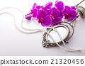 花朵 西方蘭花 花 21320456