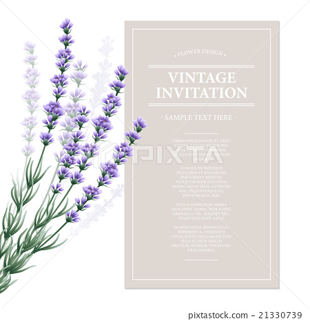 Vintage card with lavender flowers. Vector 21330739
