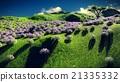 Lavender fields 21335332