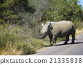 White Rhino 21335838