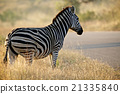 Zebra 21335840