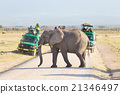 Elephantt crossing dirt roadi in Amboseli, Kenya. 21346497