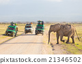 Elephantt crossing dirt roadi in Amboseli, Kenya. 21346502