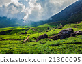 tea, plantations, green 21360095