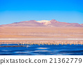 Laguna Colorada lake 21362779