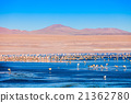 Laguna Colorada lake 21362780
