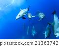 东方宽吻海豚 海豚 海洋 21363742